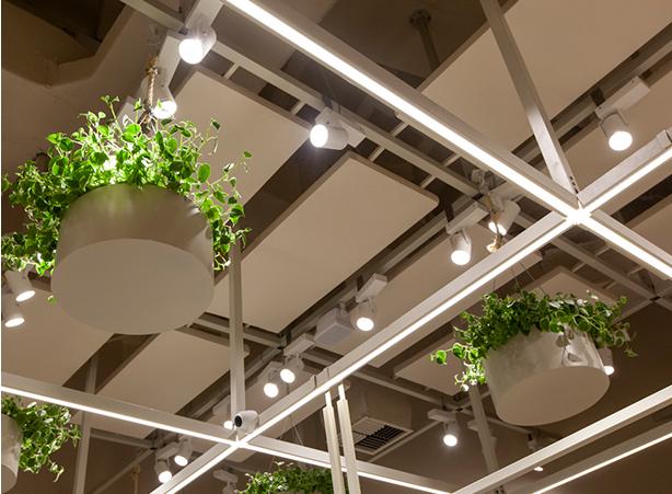 Foto das luzes de led, o detalhe da iluminação e das folhagens.